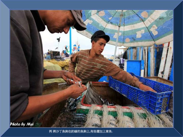 再 將沙丁魚鉤在釣線的魚鉤上