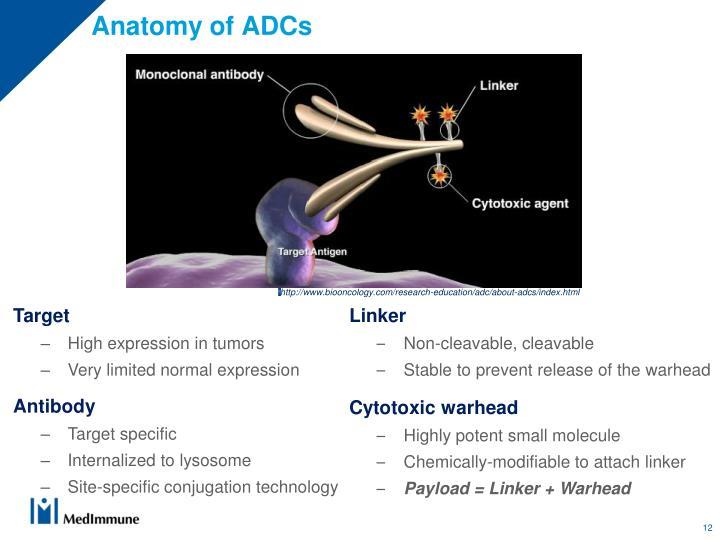 Anatomy of ADCs