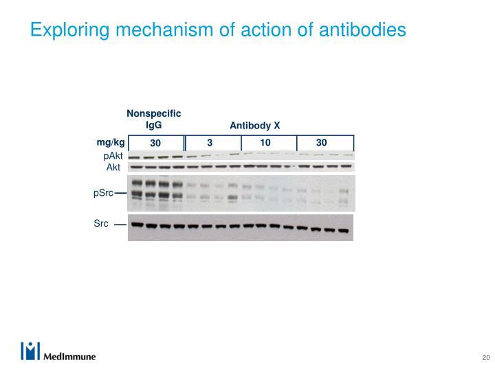 Exploring mechanism of action of antibodies