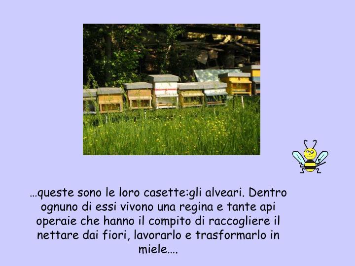 …queste sono le loro casette:gli alveari. Dentro ognuno di essi vivono una regina e tante api operaie che hanno il compito di raccogliere il nettare dai fiori, lavorarlo e trasformarlo in miele….