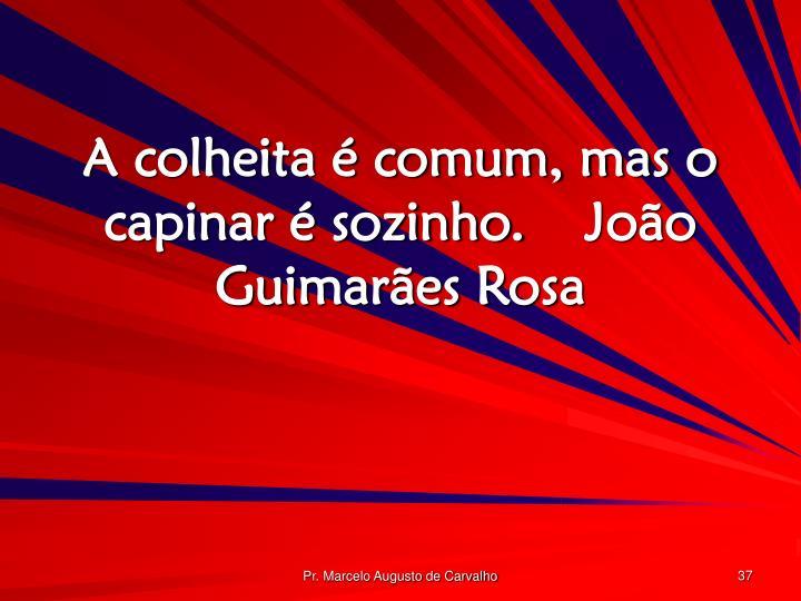 A colheita é comum, mas o capinar é sozinho.João Guimarães Rosa