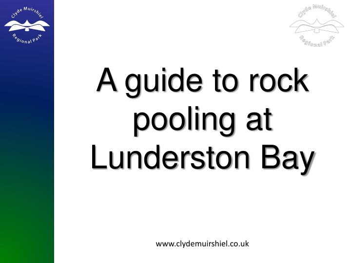 A guide to rock pooling at lunderston bay