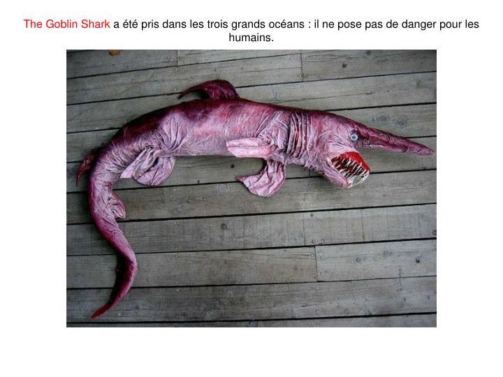 The Goblin Shark