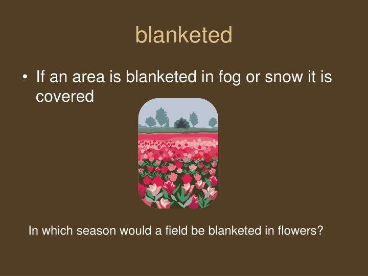 blanketed