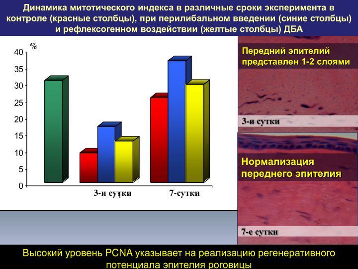 Динамика митотического индекса в различные сроки эксперимента в контроле (красные столбцы), при