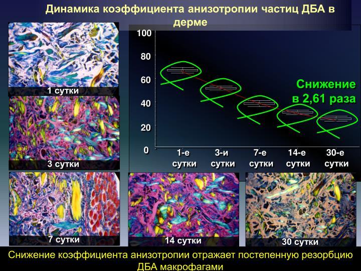 Динамика коэффициента анизотропии частиц ДБА в дерме