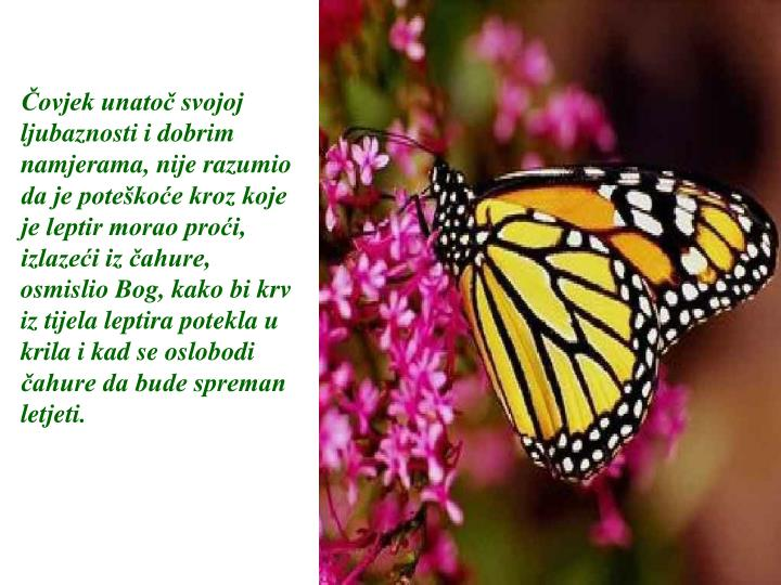 Čovjek unatoč svojoj ljubaznosti i dobrim namjerama, nije razumio da je poteškoće kroz koje je leptir morao proći, izlazeći iz čahure, osmislio Bog, kako bi krv iz tijela leptira potekla u krila i kad se oslobodi čahure da bude spreman  letjeti.