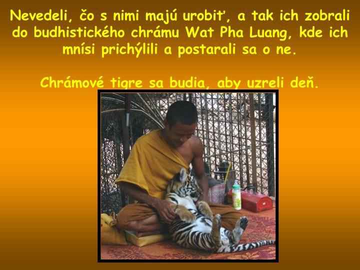 Nevedeli, čo s nimi majú urobiť, a tak ich zobrali do budhistického chrámu Wat Pha Luang, kde ich mnísi prichýlili a postarali sa o ne.