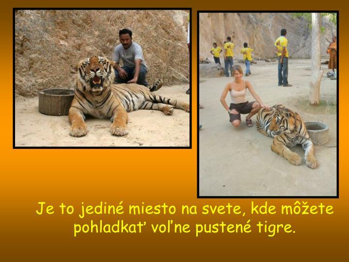 Je to jediné miesto na svete, kde môžete pohladkať voľne pustené tigre.
