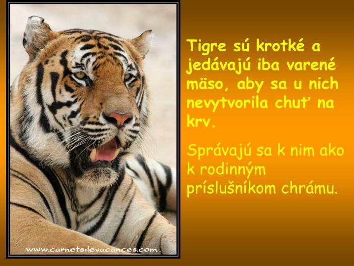 Tigre sú krotké a jedávajú iba varené mäso, aby sa u nich nevytvorila chuť na krv.