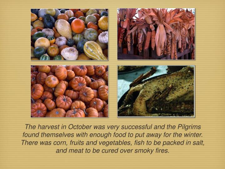 The harvest in October was very successful and the Pilgrims found themselves with enough food to put away for the winter. There was corn, fruits and vegetables, fish to be packed in salt, and meat to be cured over smoky fires.