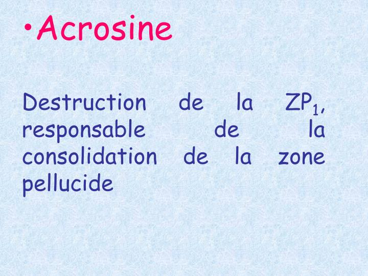 Acrosine