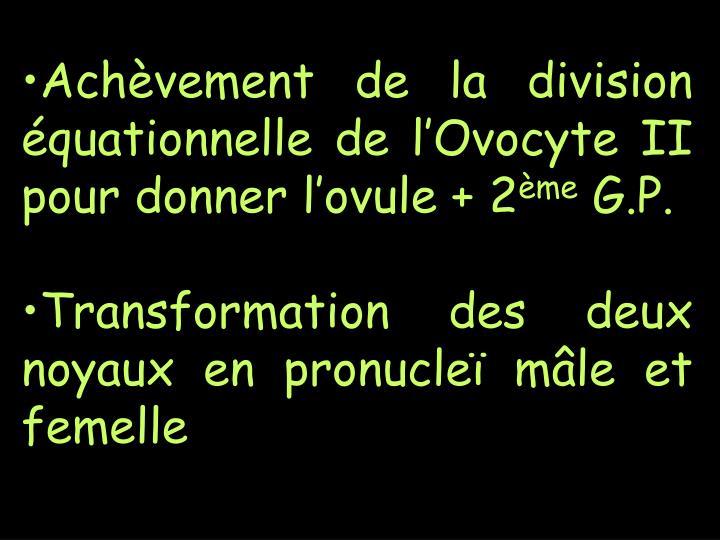 Achèvement de la division équationnelle de l'Ovocyte II pour donner l'ovule + 2