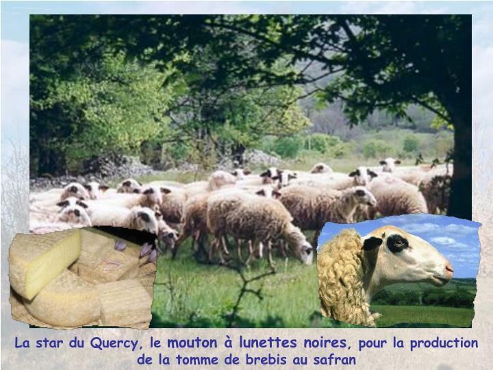 La star du Quercy, le