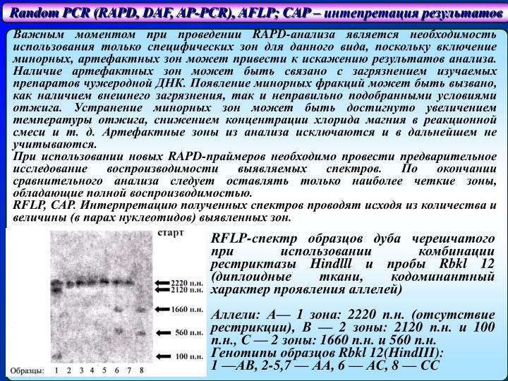Random PCR