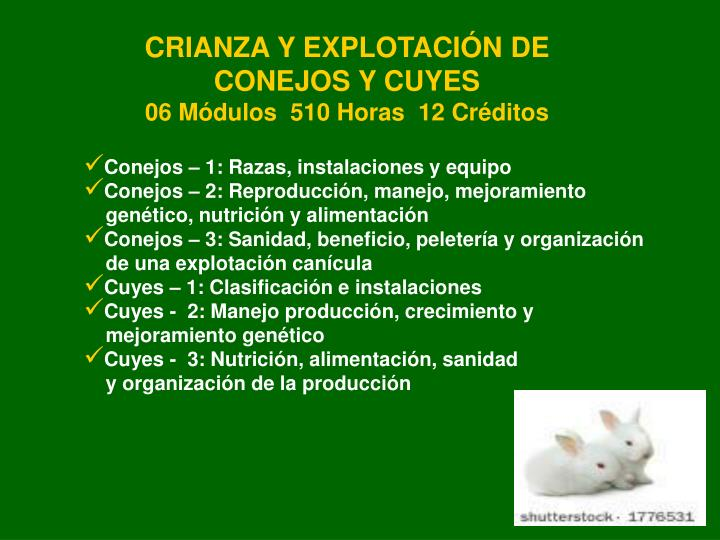 CRIANZA Y EXPLOTACIÓN DE CONEJOS Y CUYES