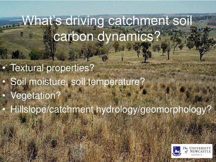 What's driving catchment soil carbon dynamics?