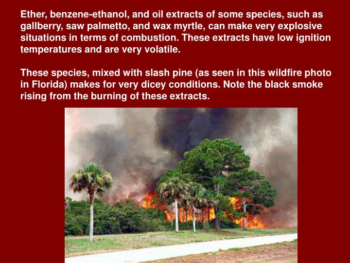 Ether, benzene-ethanol, and oil extracts of some species, such as gallberry, saw palmetto, and wax myrtle, can make very explosive situations in terms of combustion. These extracts have low ignition temperatures and are very volatile.