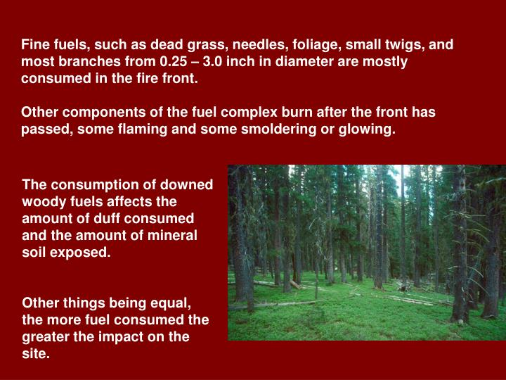 Fine fuels, such as dead grass, needles, foliage, small twigs, and most branches from 0.25 – 3.0 inch in diameter are mostly consumed in the fire front.