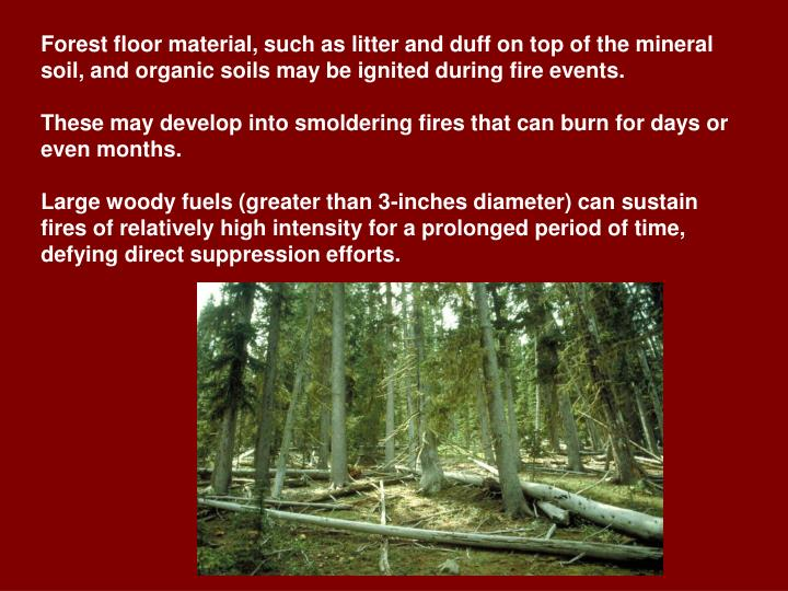 Forest floor material, such as litter and duff on top of the mineral soil, and organic soils may be ignited during fire events.