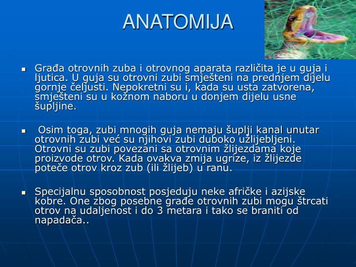 ANATOMIJA