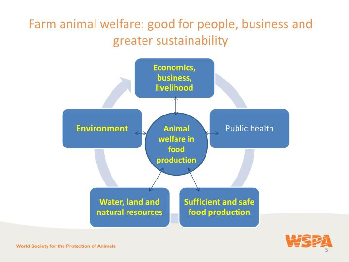 Farm animal welfare: good for people, business and greater sustainability
