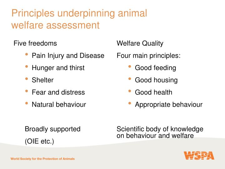 Principles underpinning animal
