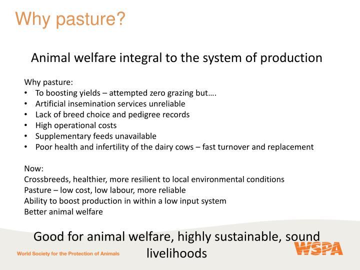 Why pasture?