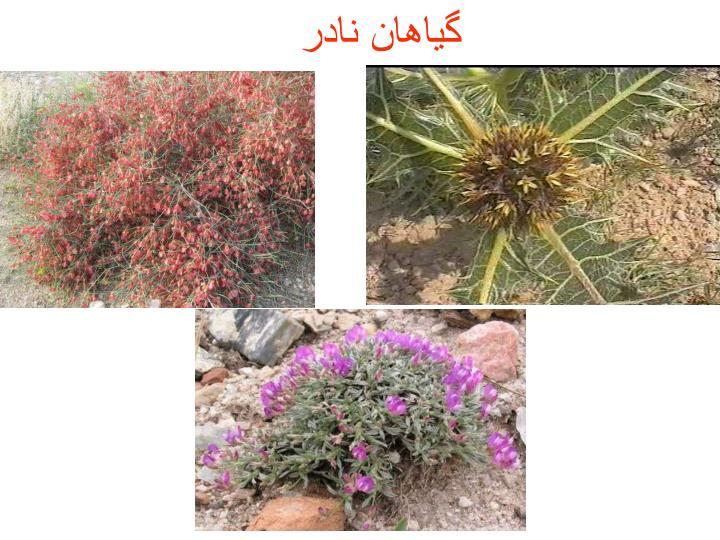گیاهان نادر