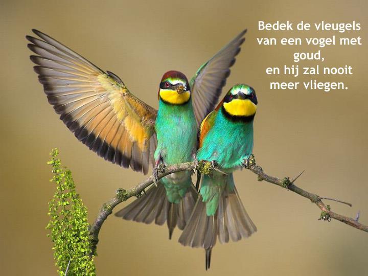Bedek de vleugels van een vogel met goud,