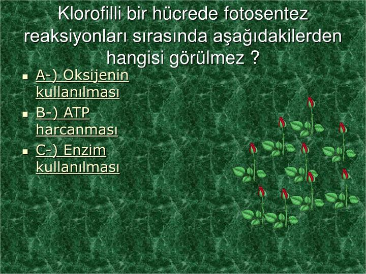 Klorofilli bir hücrede
