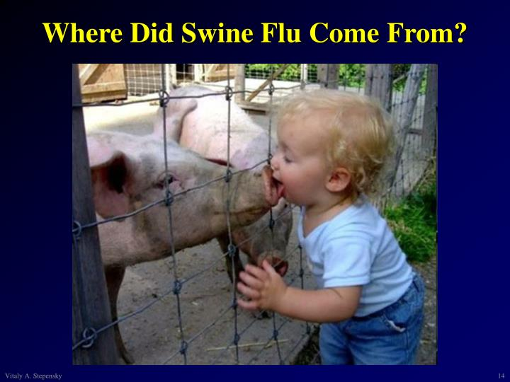 Where Did Swine Flu Come From?