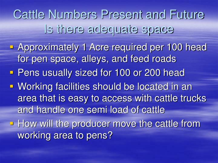 Cattle Numbers Present and Future