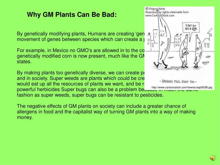 Why GM Plants Can Be Bad: