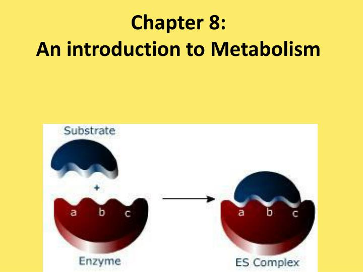 Chapter 8 an introduction to metabolism