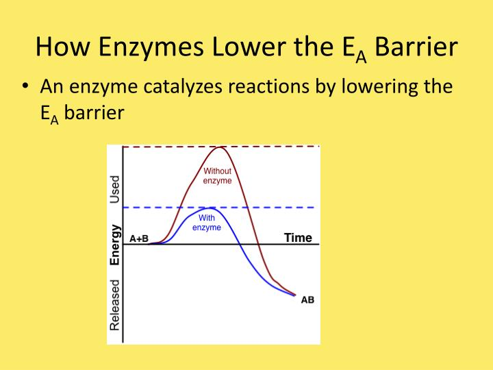 How Enzymes Lower the E