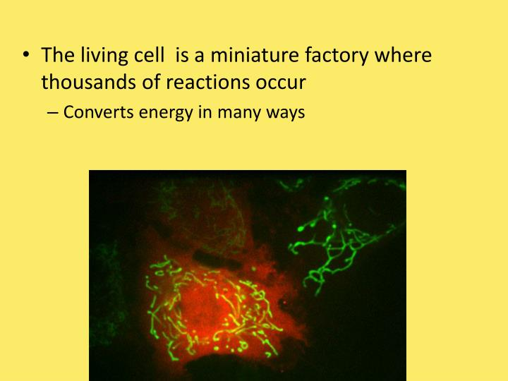 The living cell  is a miniature factory where thousands of reactions occur