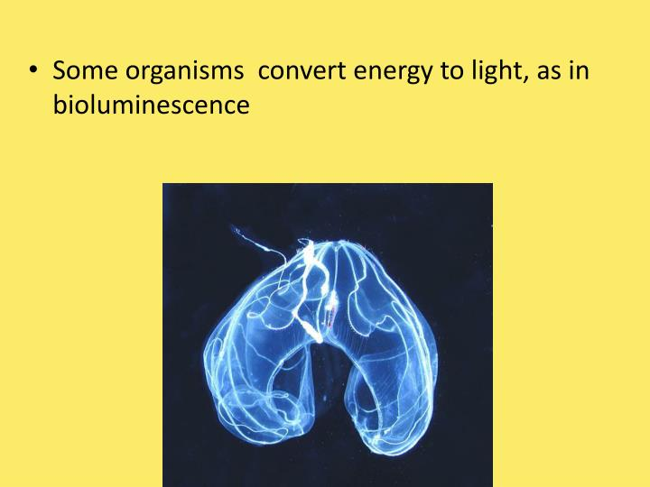 Some organisms  convert energy to light, as in bioluminescence