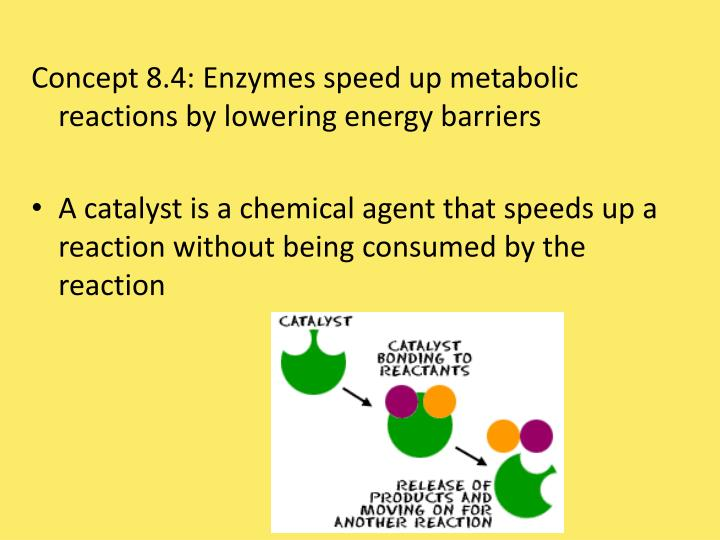 Concept 8.4: Enzymes speed up metabolic reactions by lowering energy barriers
