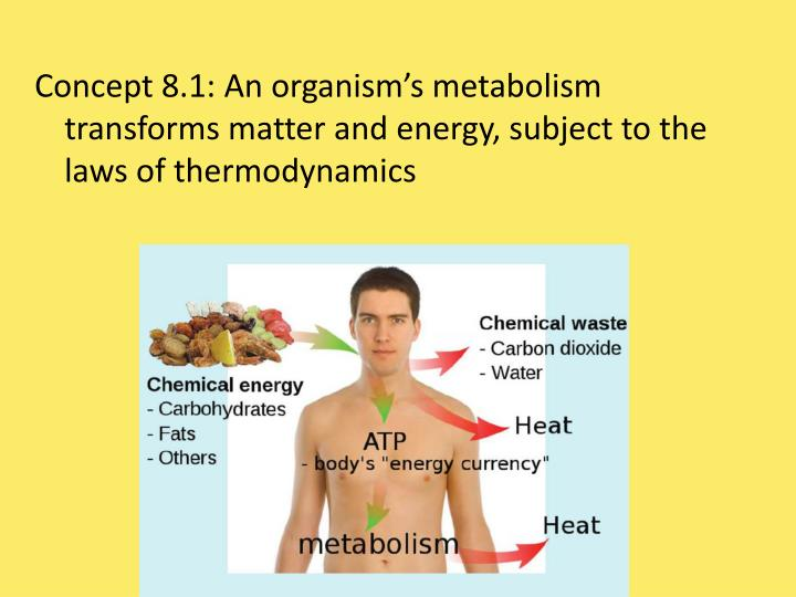 Concept 8.1: An organism's metabolism transforms matter and energy, subject to the laws of thermodynamics