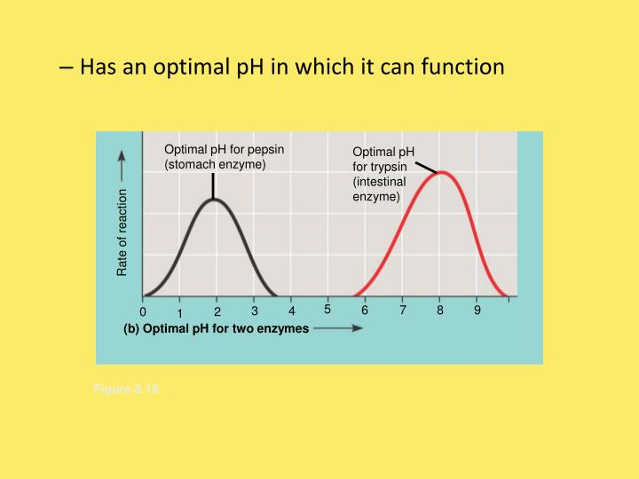 Optimal pH for pepsin