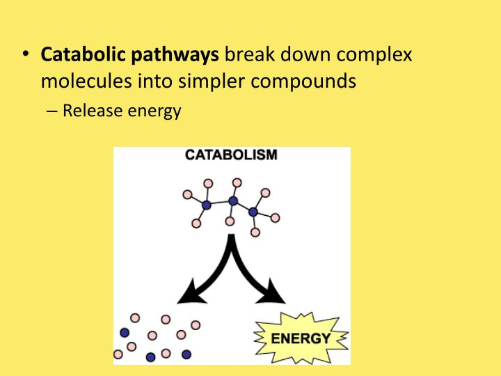 Catabolic pathways