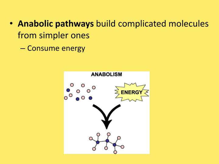 Anabolic pathways