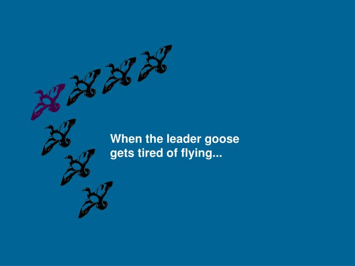 When the leader goose