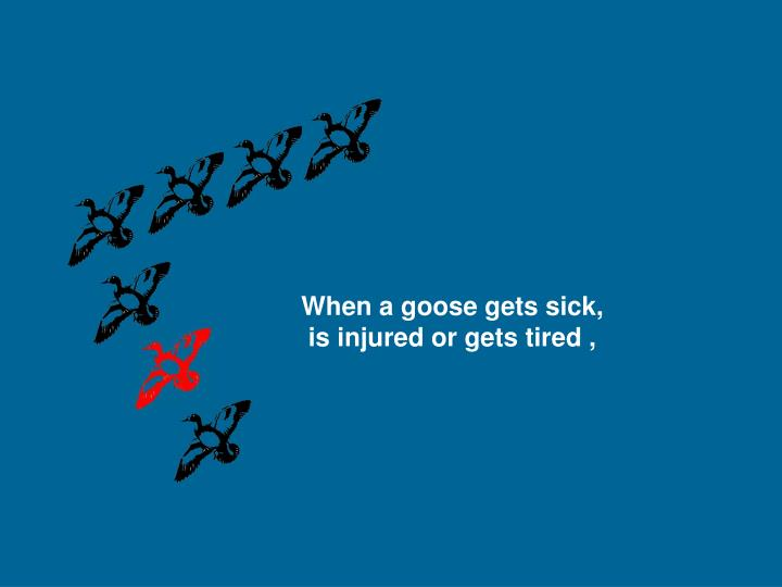 When a goose gets sick,