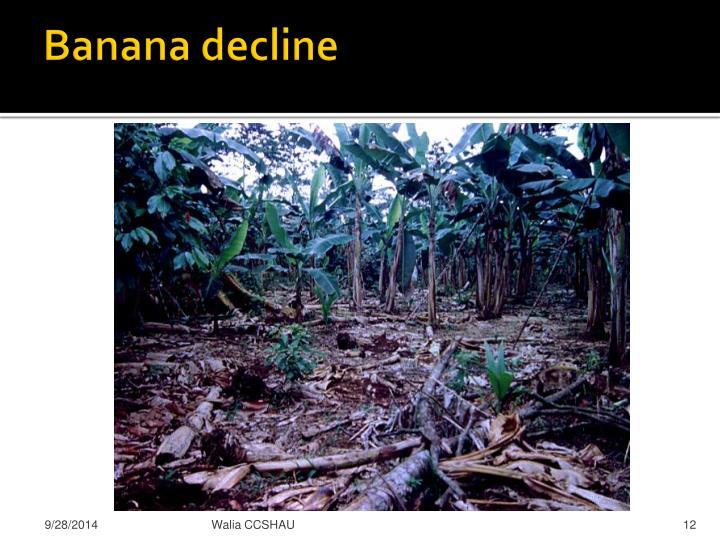Banana decline