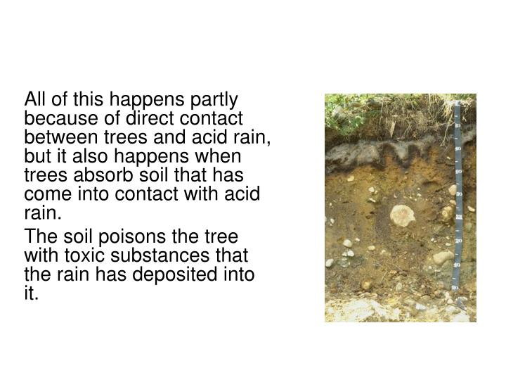 All of this happens partly because of direct contact between trees and acid rain, but it also happens when trees absorb soil that has come into contact with acid rain.