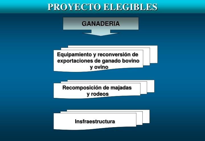 PROYECTO ELEGIBLES