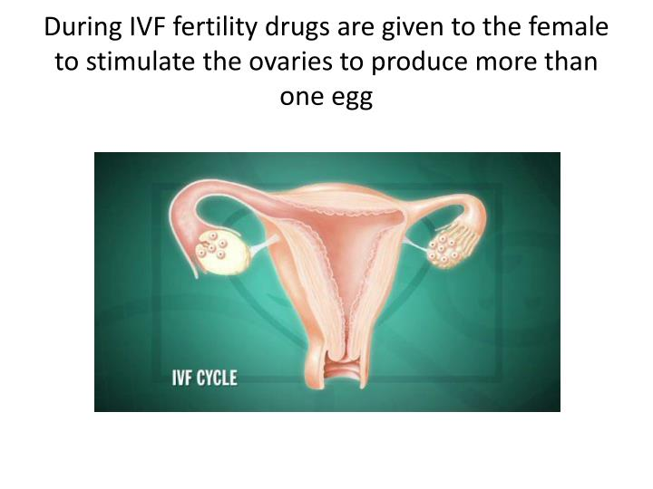 During IVF fertility drugs are given to the female to stimulate the ovaries to produce more than one egg