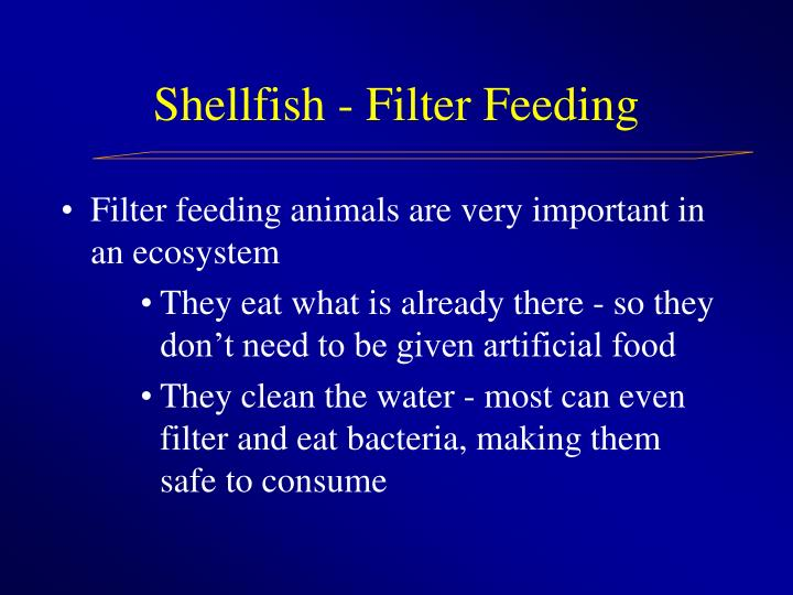Shellfish filter feeding